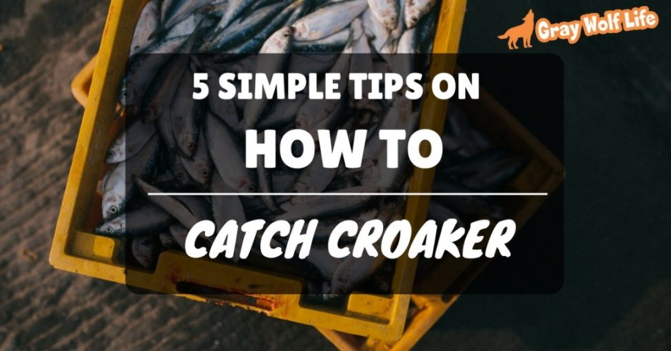 how to catch croaker