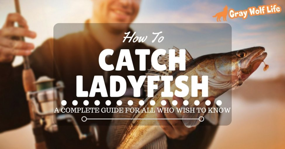 how to catch ladyfish