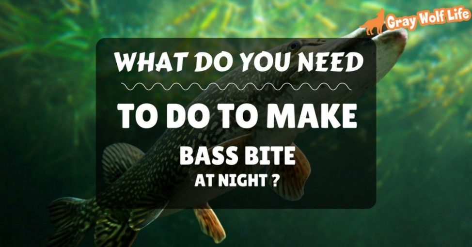 do bass bite at night