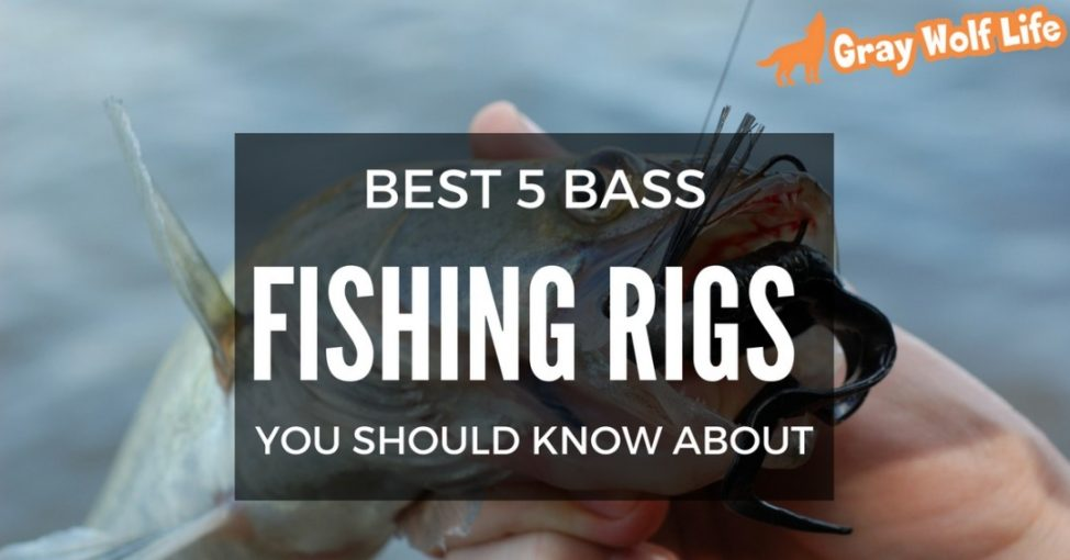 bass fishing rigs