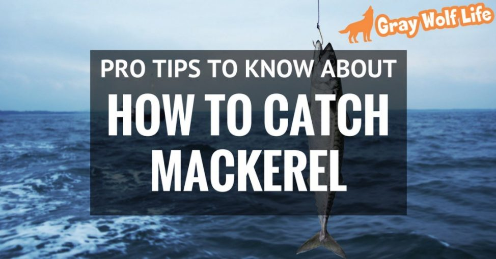 how to catch mackerel