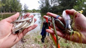 fishing lure vs bait