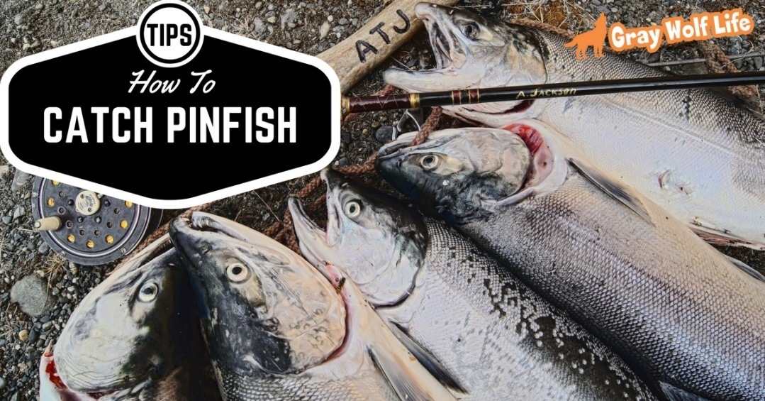 how to catch pinfish