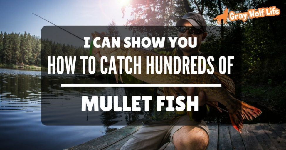 I can show you how to catch hundreds of mullet fish like a for How to catch a fish