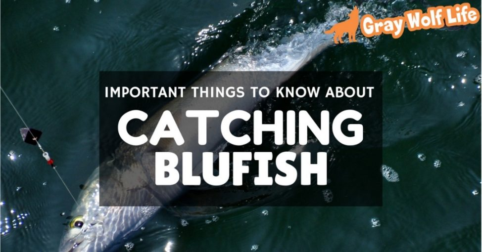 how to catch bluefish