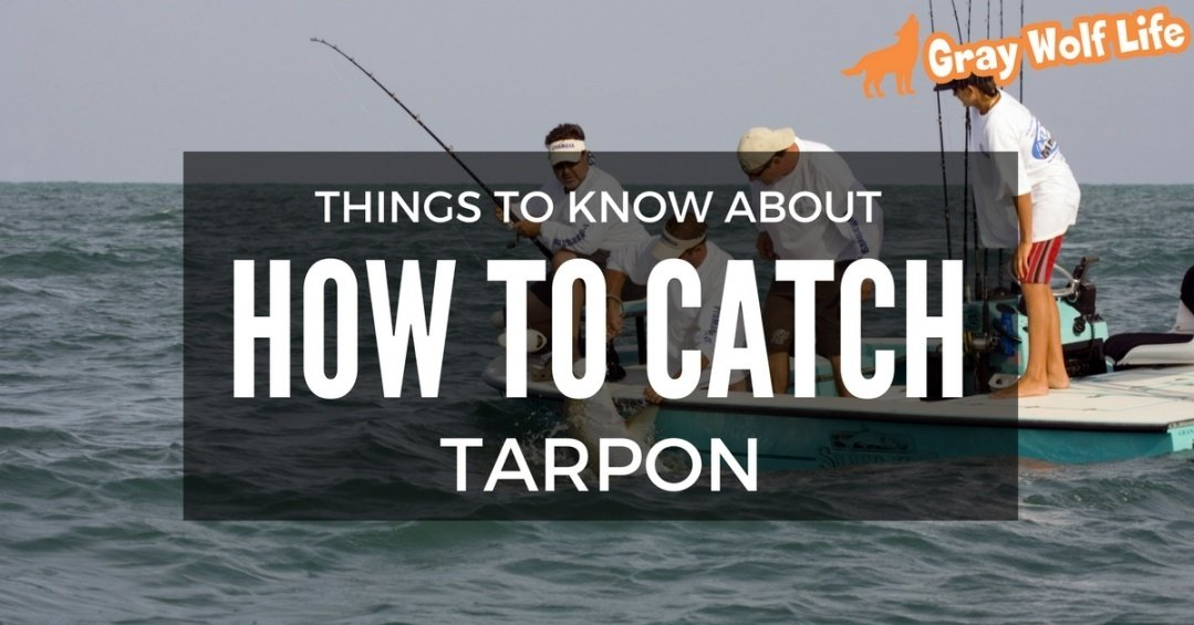 how to catch tarpon