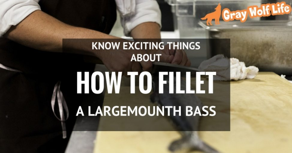 how to fillet a largemouth bass