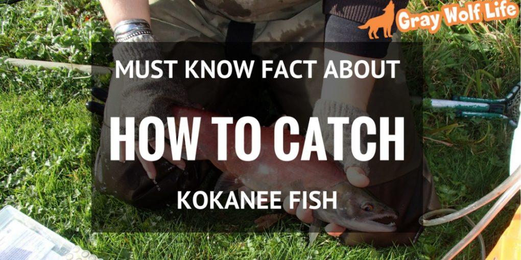 how to catch kokanee