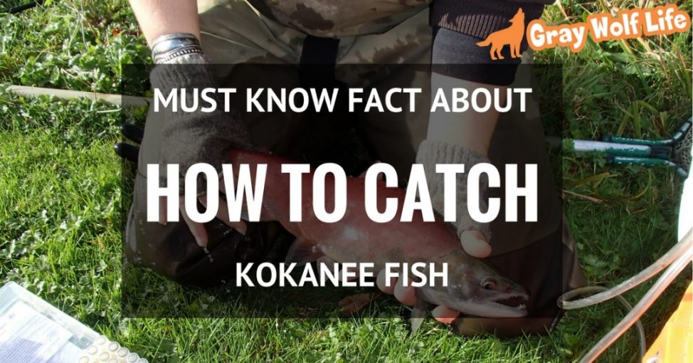 how to catch kokanee