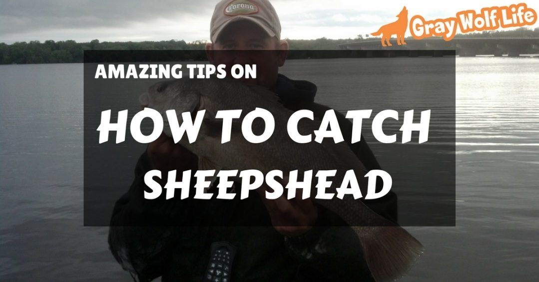 how to catch sheepshead
