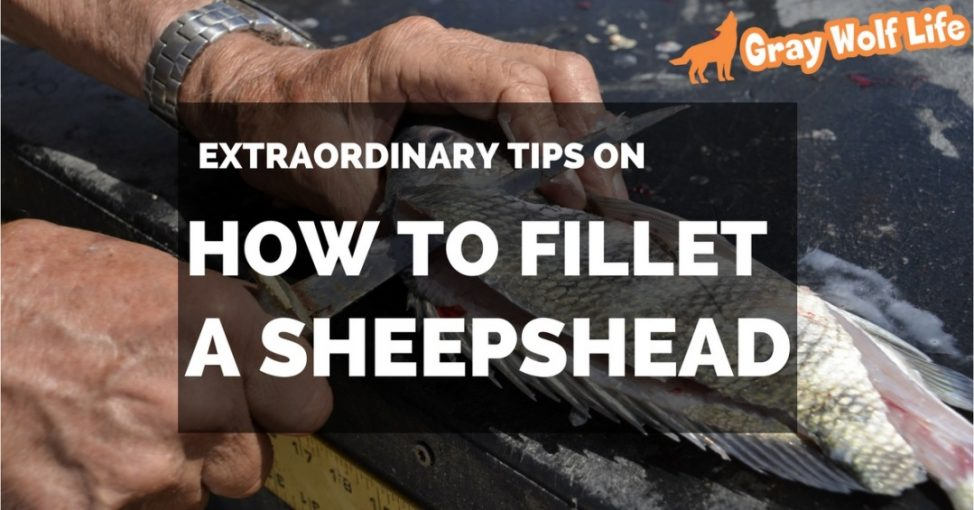 how to fillet a sheepshead